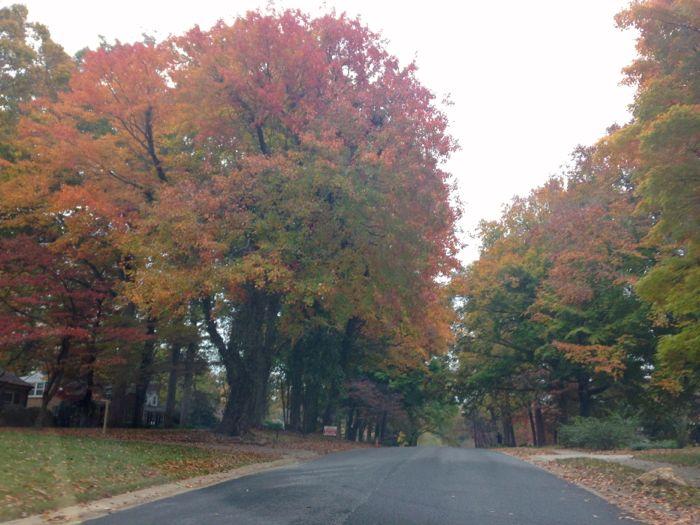 fall in greensboro