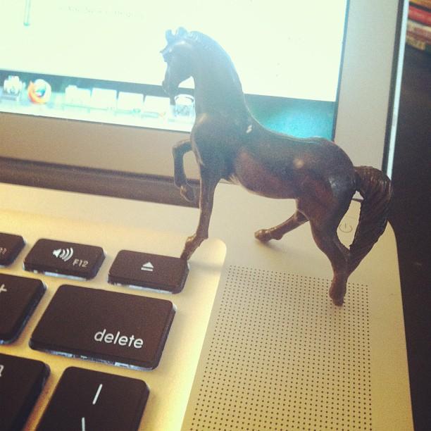 horse on my laptop
