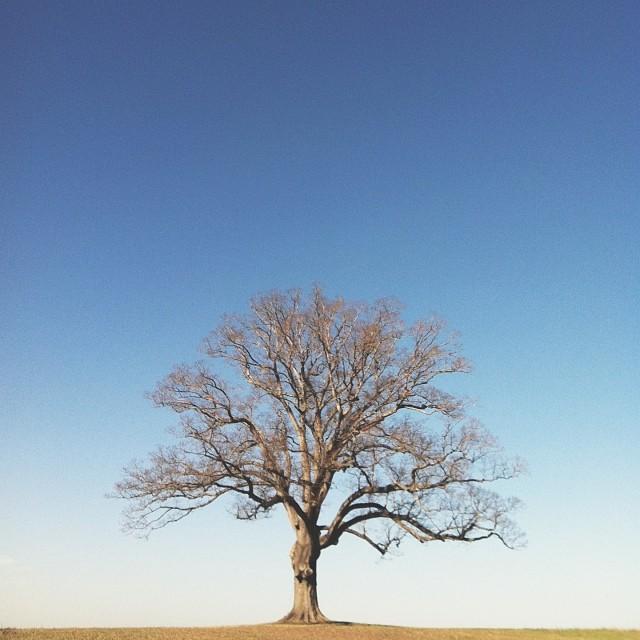 the nester's favorite tree